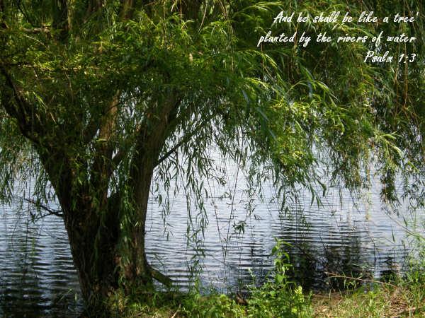 Psalm 1 3