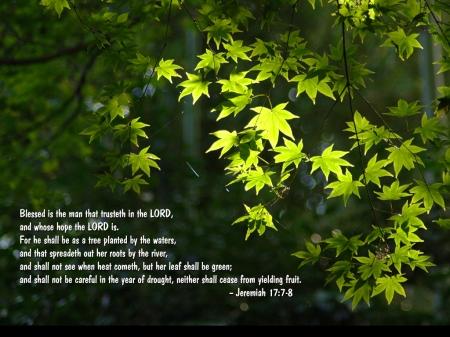 Jeremiah-17 7-8