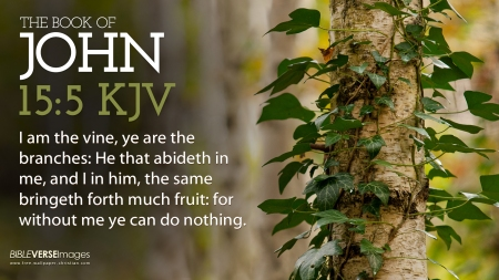 John 15 5 I Am The Vine