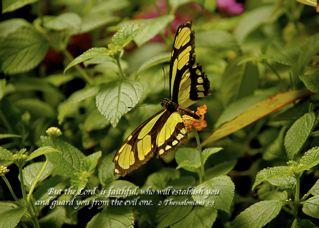 Green Malachite Butterfly