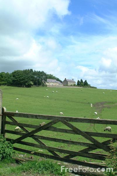 Farmyard Gate