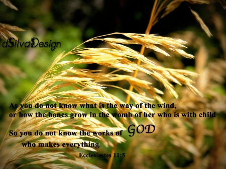 Ecclesiastes 11-5