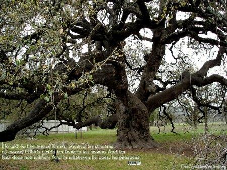 Psalm 1--3