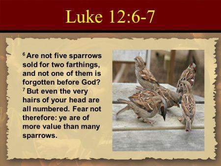 Luke 12--6-7