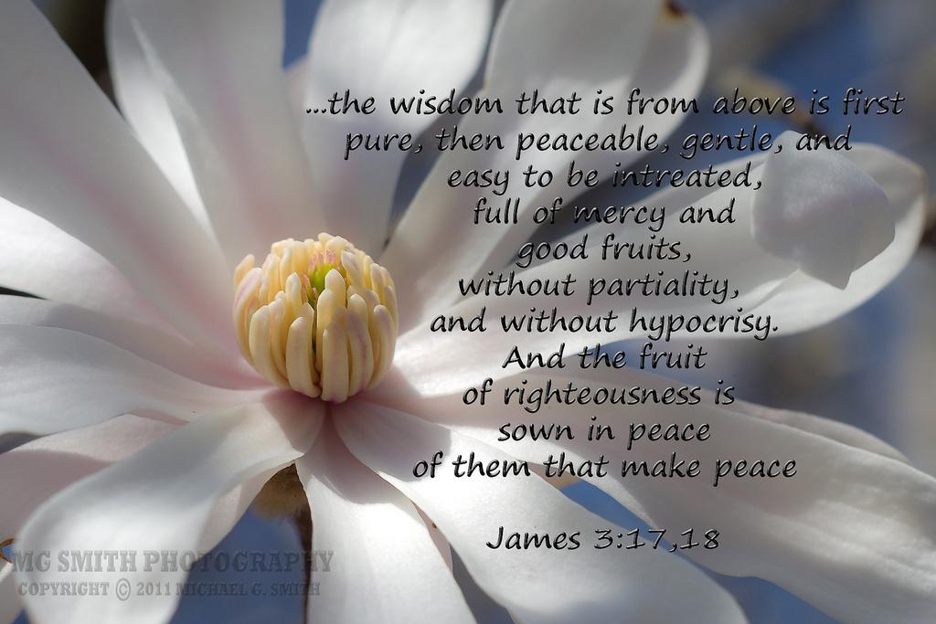 James 3--17-18 2.jpg