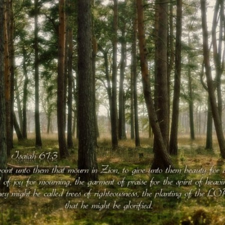 Isaiah 61--3.jpg