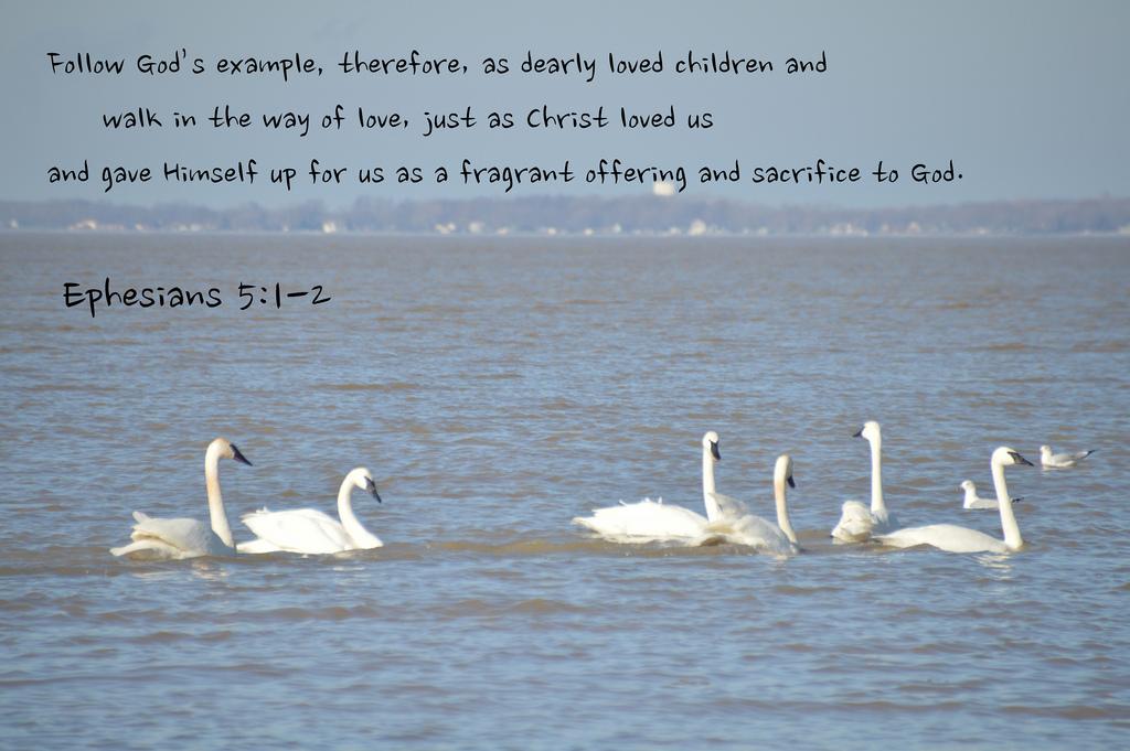 Ephesians 5--1-2