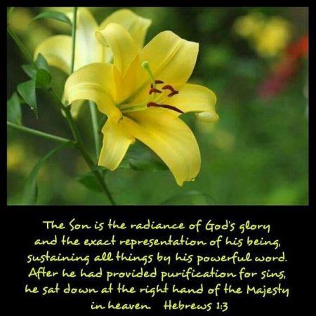 Hebrews-1--3--flower