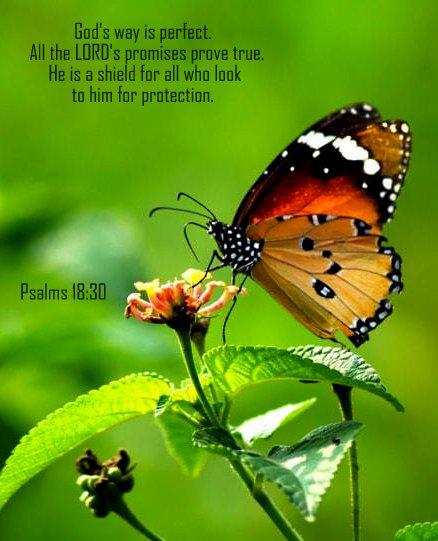 Psalm 18--30